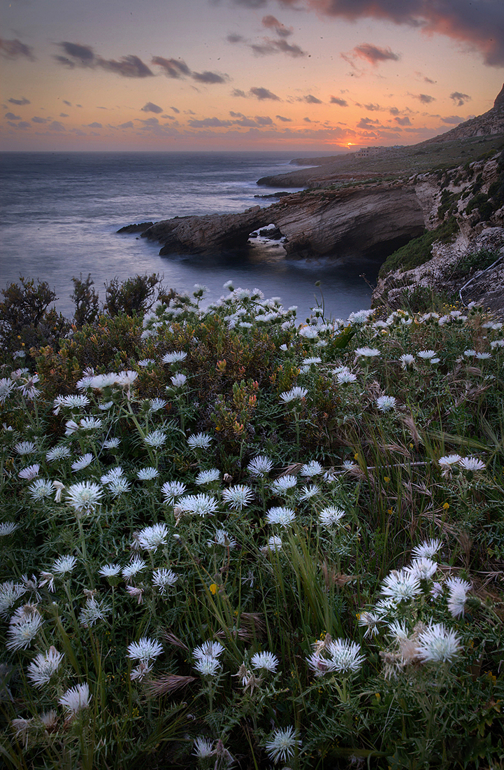 Flowers on the cliff; Malta Photo Tour, March 2018